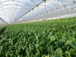 coltivazioni02